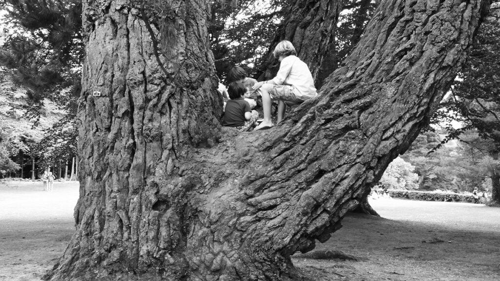 Kinder sitzen auf einem großen, sehr alten Baum.